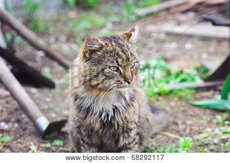 Unruffled Cat. Sitting And Looking