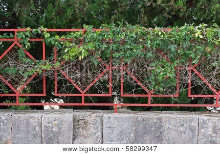 Clinging Green Plant On Red Fence