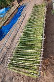 stock photo of tobacco barn  - Drying tobacco in tobacco field of Thailand - JPG