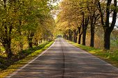 picture of tree lined street  - Some Road in Czech Republic with trees - JPG