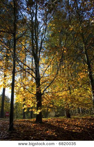 Long Shadows Through Autumn Trees