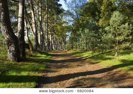 Path Through Tall Trees