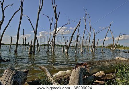 Dead trees at shoreline