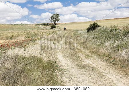 a long walk on the countryside