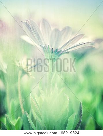 Gentle daisy field, soft focus, fine art, photo with blur effect, beautiful white flowers, floral screensaver, beauty of nature concept