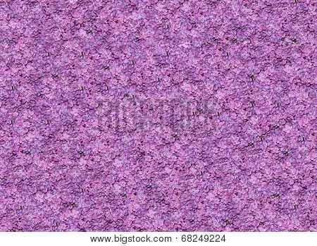 Seamless texture of violet lilac