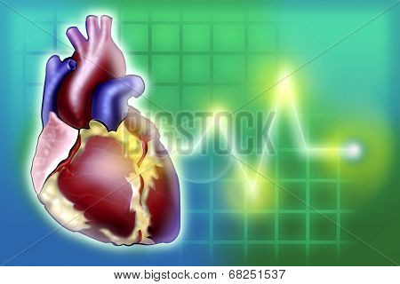 Heart illustration concept