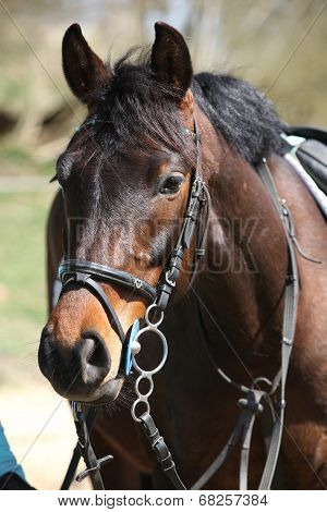 Portrait Of Nice Pony