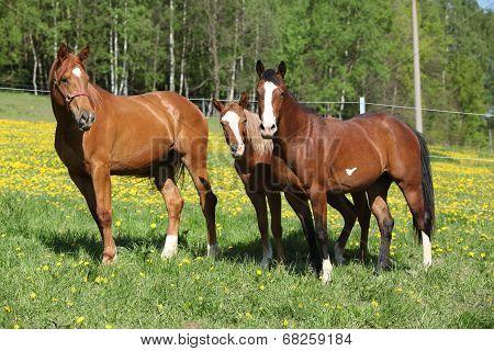 Batch Of Western Horses On Pasturage