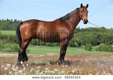 Amazing Brown Horse Standing In Nature