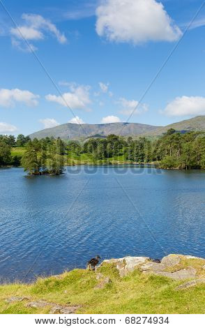 Tarn Hows near Hawkshead Lake District National Park England uk on a beautiful sunny summer day