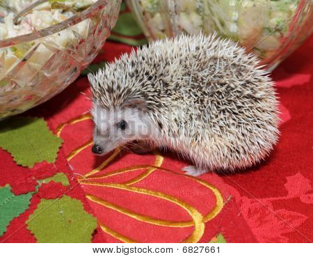 Hedgehog On A Dining Table