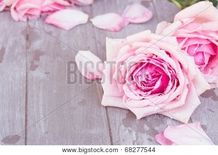 pink  roses  on table