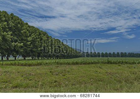 Sown field in KwaZulu-Natal nature reserve, Drakensberg