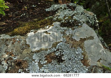 Shapes of moss and lichen over the stone
