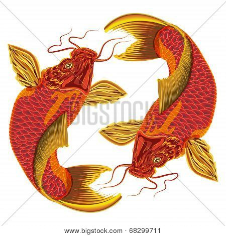 Japanese carp on a white background.