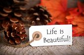 picture of proverb  - A Fall Label with the Words Life is Beautiful - JPG