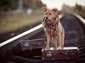 picture of dog tracks  - Dog on rails with suitcases. The dog looks for the house. The dog waits for the owner. The lost dog. 