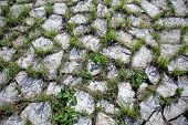 stock photo of interlock  - Grungy interlocking concrete pavement with grass growing along its joint for textural background - JPG
