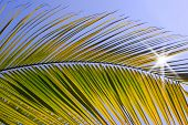 image of summer beach  - palm tree  on the beach and blue sky - JPG