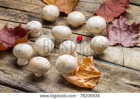 Growing  Mushrooms With Fall Leaves On Wooden Board.