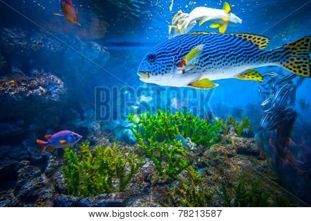 Coral Reef and Tropical Fish in Sunlight. Singapore aquarium