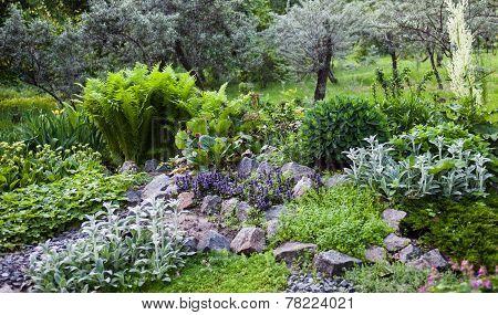 Lush Vegetation In The Green Rock Garden