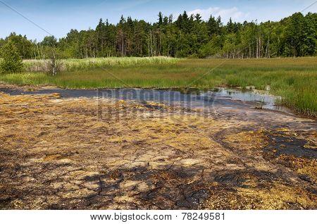 Peat bog and fen