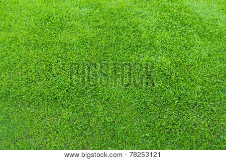 greensward football field background Green field