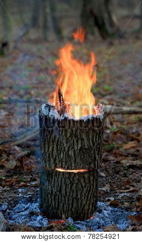 Hot camp fire in forest