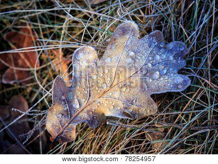 Abstract frozen oak leaf on grass
