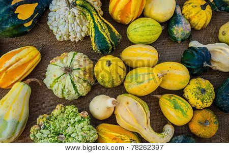 Market stall of gourds, squashes and pumpkins