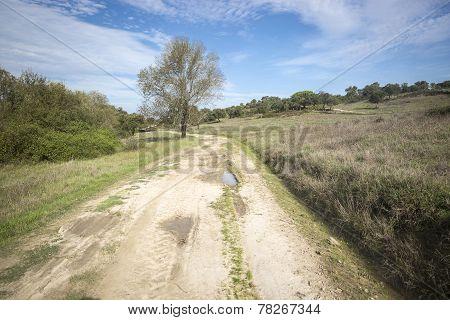 rural dirt road in an autumn day - Alentejo region, Portugal