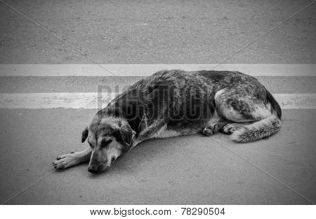 Homeless Stray Dog