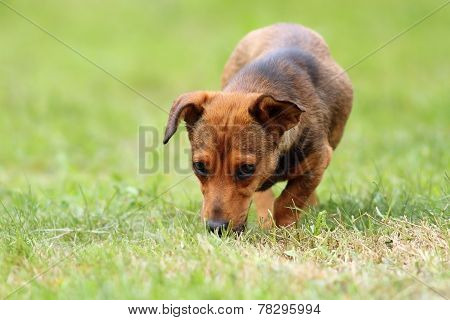 Mongrel Dog In The Field