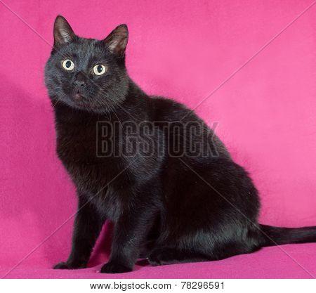 Black Cat Sitting On Crimson