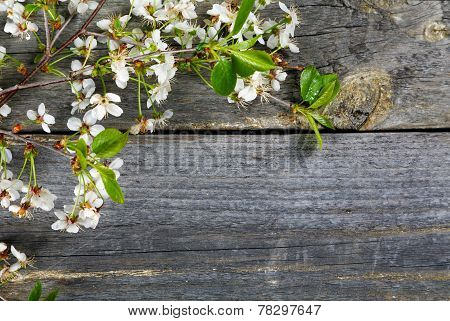 Branches Of A Cherry  On An Old Table