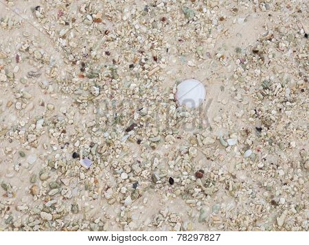 Sand With Fragments Of Shells