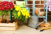 pic of flower pots  - Flowers in pot on chair - JPG