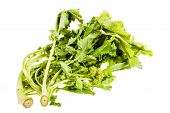 stock photo of turnips  - a heap of turnip greens isolated over a white background - JPG