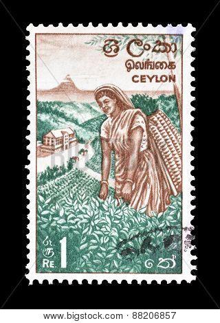 Ceylon 1964