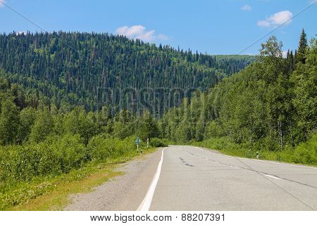 Road and forest