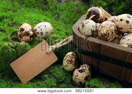 Bird eggs in wooden bucket on green grass background
