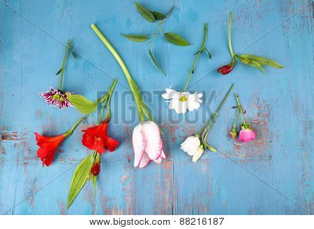 Different flowers on wooden background