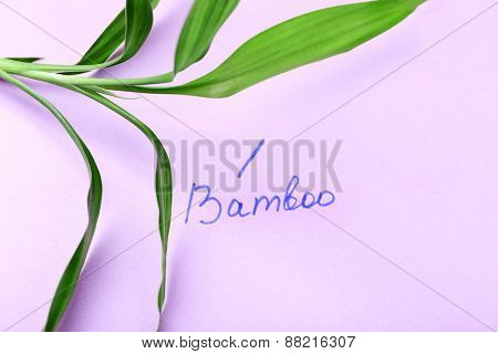 Green bamboo twig with inscription on paper background