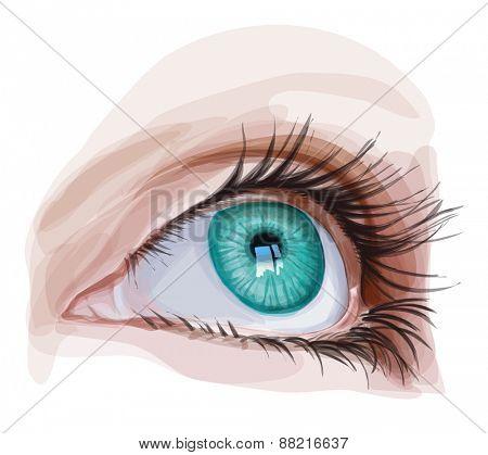 Green Eye. Vector illustration / Eps10