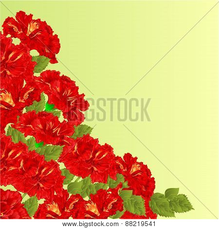 Flowering Shrub Red Hibiscus Vector