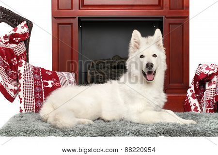 White Swiss Shepherd Dog
