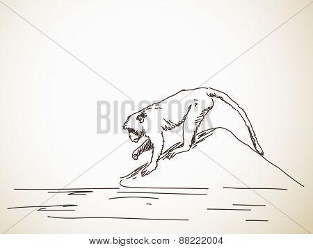 Sketch of monkey Hand drawn vector illustration