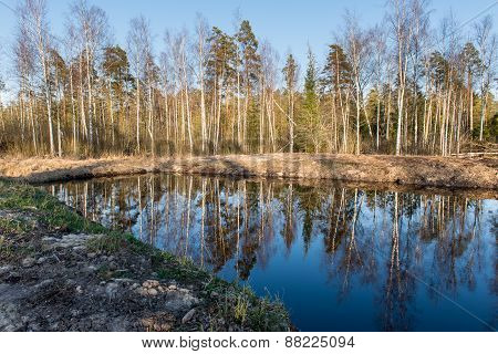 Reflections Of Trees In Water